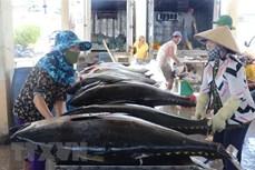 EVFTA生效之后越南金枪鱼对欧洲出口呈两位数增长