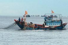 美国战略与国际研究中心:东海捕鱼产量大幅下降