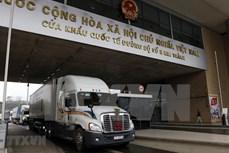 超过1.4万吨火龙果通过老街口岸向中国出口