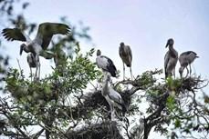 自然资源与环境部建议成立越南拉姆萨尔湿地网络