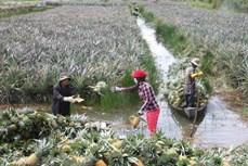 九龙江三角洲各省推进农产品价值链可持续建设