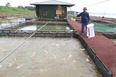 隆安省促进工业化水产养殖