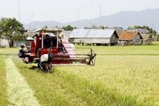 嘉莱省富善县多措并举打造大米品牌