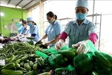 2021年前4月越南农林水产品出口额增长24%以上