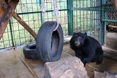 加大对熊类保护的宣传力度