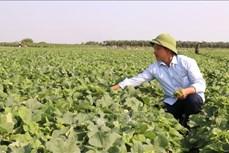 Xây dựng các mô hình kinh tế trang trại có hiệu quả cao