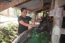Trao cơ hội thoát nghèo cho người dân vùng cao biên giới Bảo Lạc