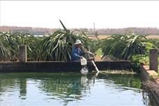 Nông dân Bình Thuận đào ao, xây bể tích trữ nước để ứng phó với hạn hán