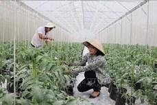 Những mô hình khoa học công nghệ xây dựng nông thôn mới mang lại hiệu quả kinh tế cao