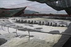 Thu tiền tỷ nhờ nuôi tôm công nghệ cao ở Bà Rịa - Vũng Tàu