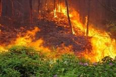"""Cháy rừng mùa khô – Đừng để """"đến hẹn lại lên"""""""