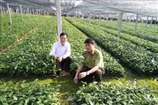 Trồng rừng phát triển mạnh ở Yên Bái