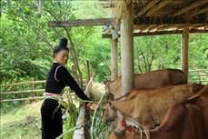 Kinh tế vùng biên đổi thay từ xây dựng nông thôn mới ở Sơn La