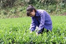 Thái Nguyên xây dựng nông thôn mới gắn với chương trình mỗi xã một sản phẩm