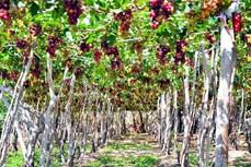 Gắn kết phát triển nông nghiệp với du lịch sinh thái