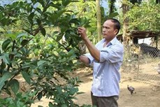 Huyện miền núi Quan Hóa quyết tâm thoát nghèo