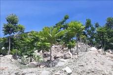 Nhiều giải pháp nâng cao độ che phủ rừng ở Ninh Thuận