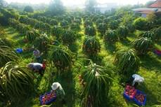Bình Thuận lồng ghép nhiều chương trình phát triển toàn diện vùng đồng bào dân tộc thiểu số
