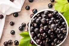 Nghiên cứu thuốc điều trị COVID-19 từ quả acai berry