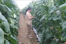 Tiền Giang nỗ lực giải quyết đầu ra cho nông sản hàng hóa