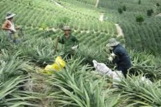 Phú Yên đạt được mục tiêu giảm nghèo