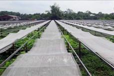Thái Nguyên: Thực hiện cơ chế hỗ trợ sản phẩm OCOP