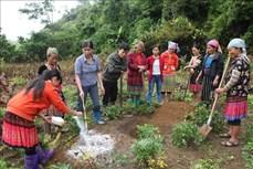Hiệu quả việc đào tạo nghề cho lao động nông thôn ở huyện vùng cao Sìn Hồ