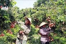 Bắc Giang ứng dụng khoa học công nghệ thúc đẩy phát triển kinh tế - xã hội vùng miền núi và dân tộc thiểu số