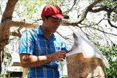 Nuôi ong dú lấy mật cho nông dân Bình Châu thu nhập cao