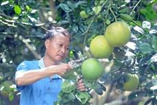 Thay đổi tư duy canh tác, hướng đến sản xuất nông nghiệp sạch ở huyện Mai Sơn