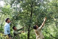 Hiệu quả từ chính sách chi trả dịch vụ môi trường rừng nơi vùng cao Lai Châu