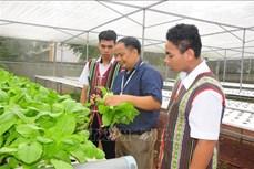 """Dạy học sinh biết yêu lao động qua mô hình """"Vườn rau trường học"""" ở Bù Gia Mập"""