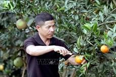 Hợp tác xã nông nghiệp - cầu nối liên kết sản xuất hiệu quả ở Sơn La