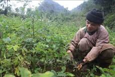 Cao Bằng nâng trách nhiệm của Hội Nông dân trong phát triển nông nghiệp, xây dựng nông thôn mới