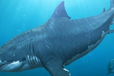 Phát hiện mới về tập tính nuôi con của cá mập lớn nhất đại dương thời tiền sử
