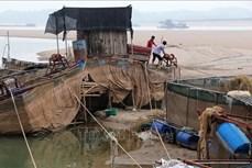 Nước cạn, nghề nuôi cá lồng trên sông Đà gặp khó