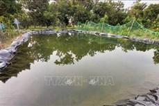 Nhà vườn ở Bến Tre chủ động trữ nước ngọt ứng phó hạn mặn