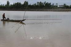 Làng nghề khô cá khan hiếm nguồn cá đồng
