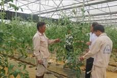 Hiệu quả từ công tác đào tạo nghề cho lao động nông thôn ở Lai Châu