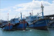 Ninh Thuận đầu tư nâng cao hiệu quả khai thác hải sản xa bờ
