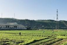 Trồng cây vụ 3 ngắn ngày tăng thu nhập cho nông dân Quảng Ninh