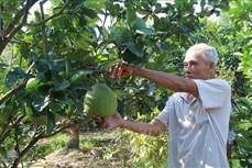 Tiền Giang chuyển đổi 7.700 ha đất lúa sang trồng cây ăn quả và nuôi thủy sản