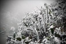 Vùng núi Bắc Bộ còn băng tuyết, cần tăng cường phòng, chống rét và dịch bệnh cho cây trồng, vật nuôi