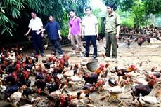 Hà Giang chú trọng đào tạo nghề, giải quyết việc làm để giảm nghèo bền vững
