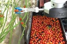 Nhật Bản chế tạo robot sử dụng trí tuệ nhân tạo để thu hoạch trái cây