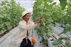 Trà Vinh ưu tiên hỗ trợ nông dân thực hành các mô hình sản xuất sạch
