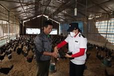 Vĩnh Phúc hướng dẫn nông dân áp dụng chăn nuôi an toàn sinh học