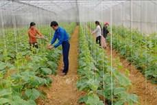 Anh Lương Ngọc Lai làm giàu nhờ mô hình trang trại xanh ba sạch
