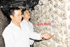 Trồng nấm cho hiệu quả kinh tế cao ở Tân Thành