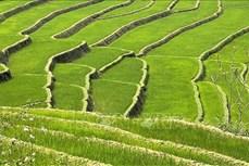 Vẻ đẹp của ruộng bậc thang mùa mạ non nơi biên giới Lai Châu